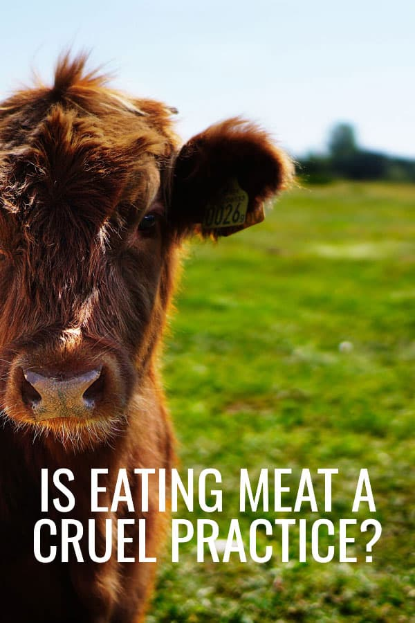 Is meat eating a cruel practise?